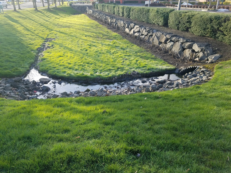 Grassy Stormwater Pond
