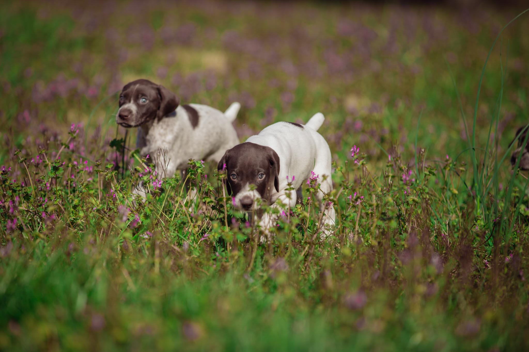 Ranch_Puppies-98.jpg