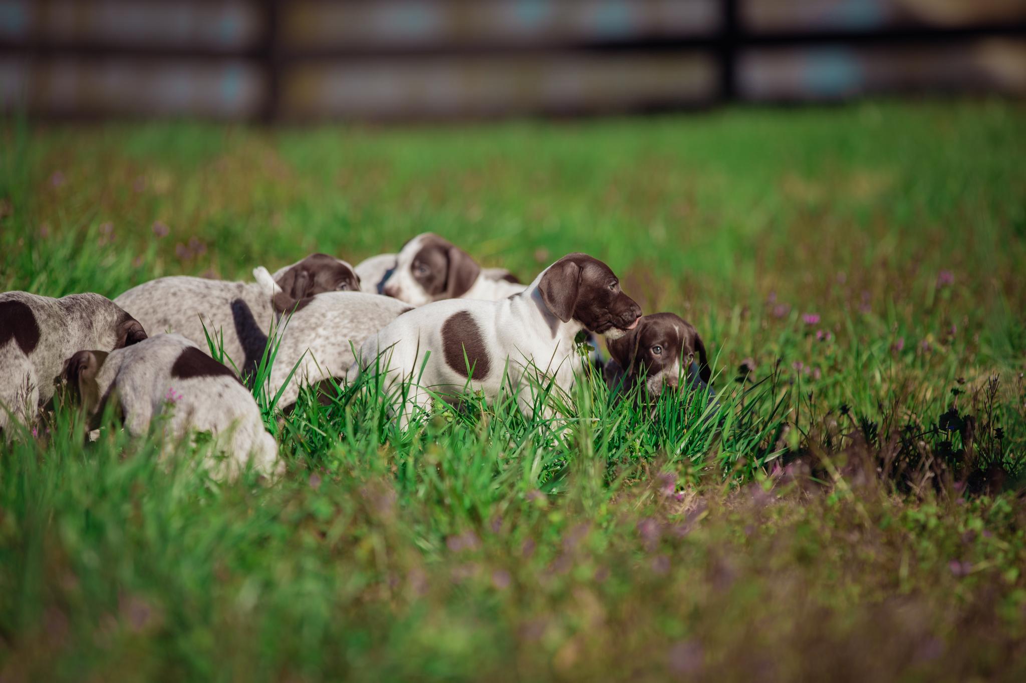 Ranch_Puppies-117.jpg