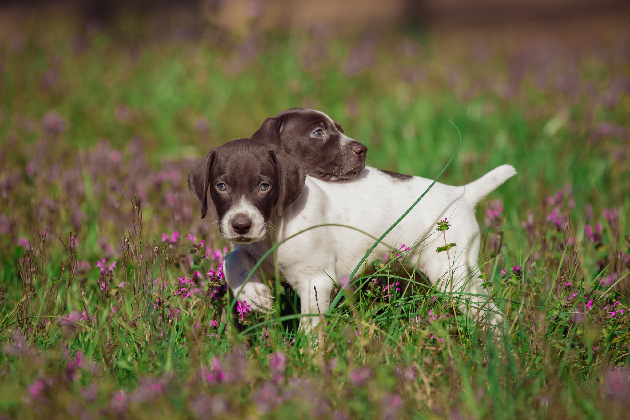 Ranch_Puppies-113.jpg