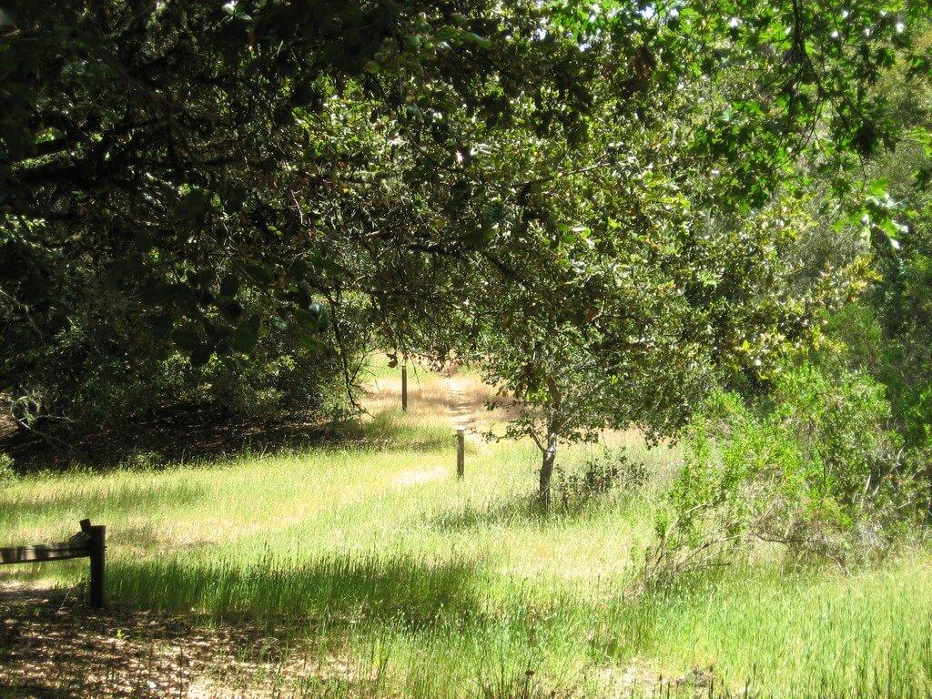 running trails menlo park.jpg
