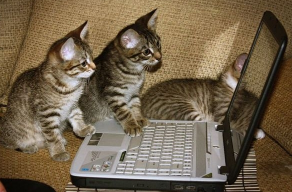 laptop_cats.jpg
