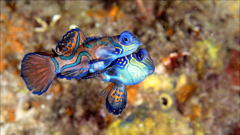 FFOTW_112_cu fish.jpg