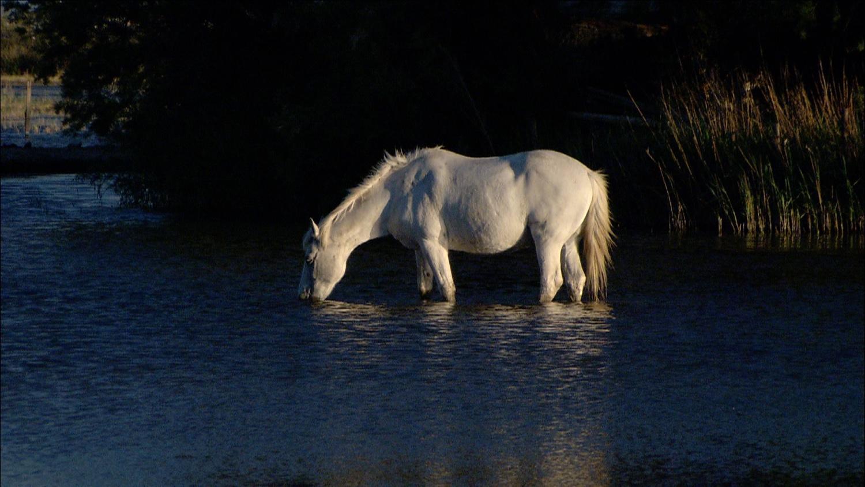 FFOTW_107_great horse shot.jpg