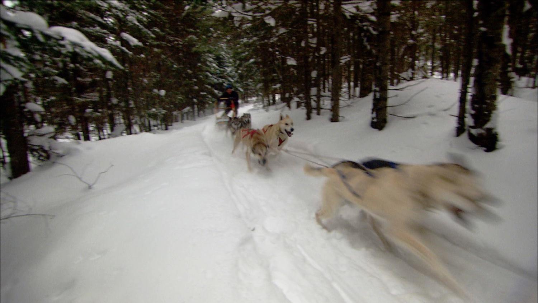 FFOTW_104_action dog sled.jpg