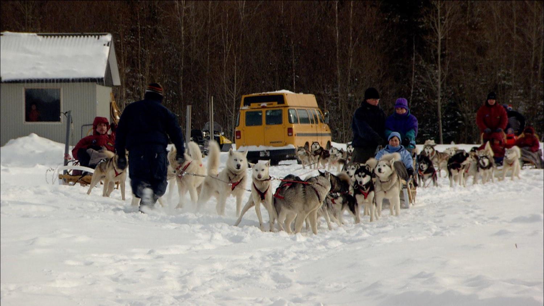 FFOTW_104_dogs lined up.jpg