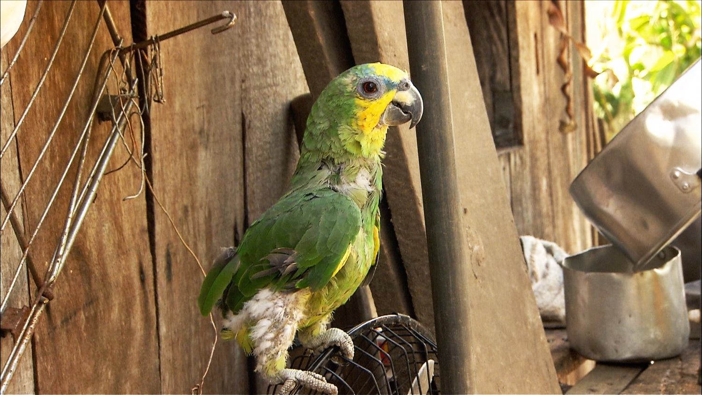 FFOTW_208_nice parrot.jpg