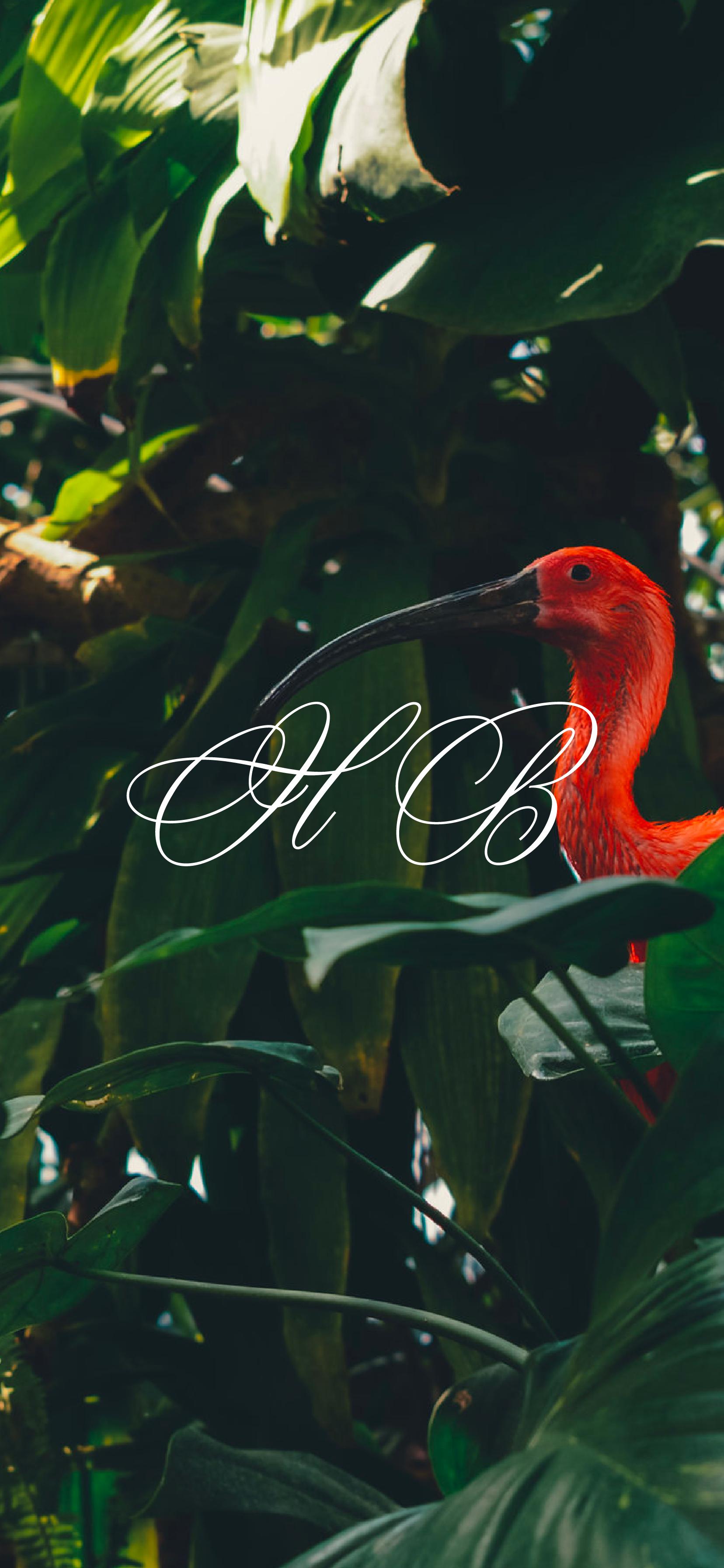 phone_flamingo@2x.png
