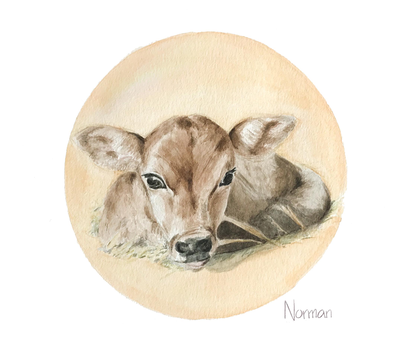 Norman the Calf