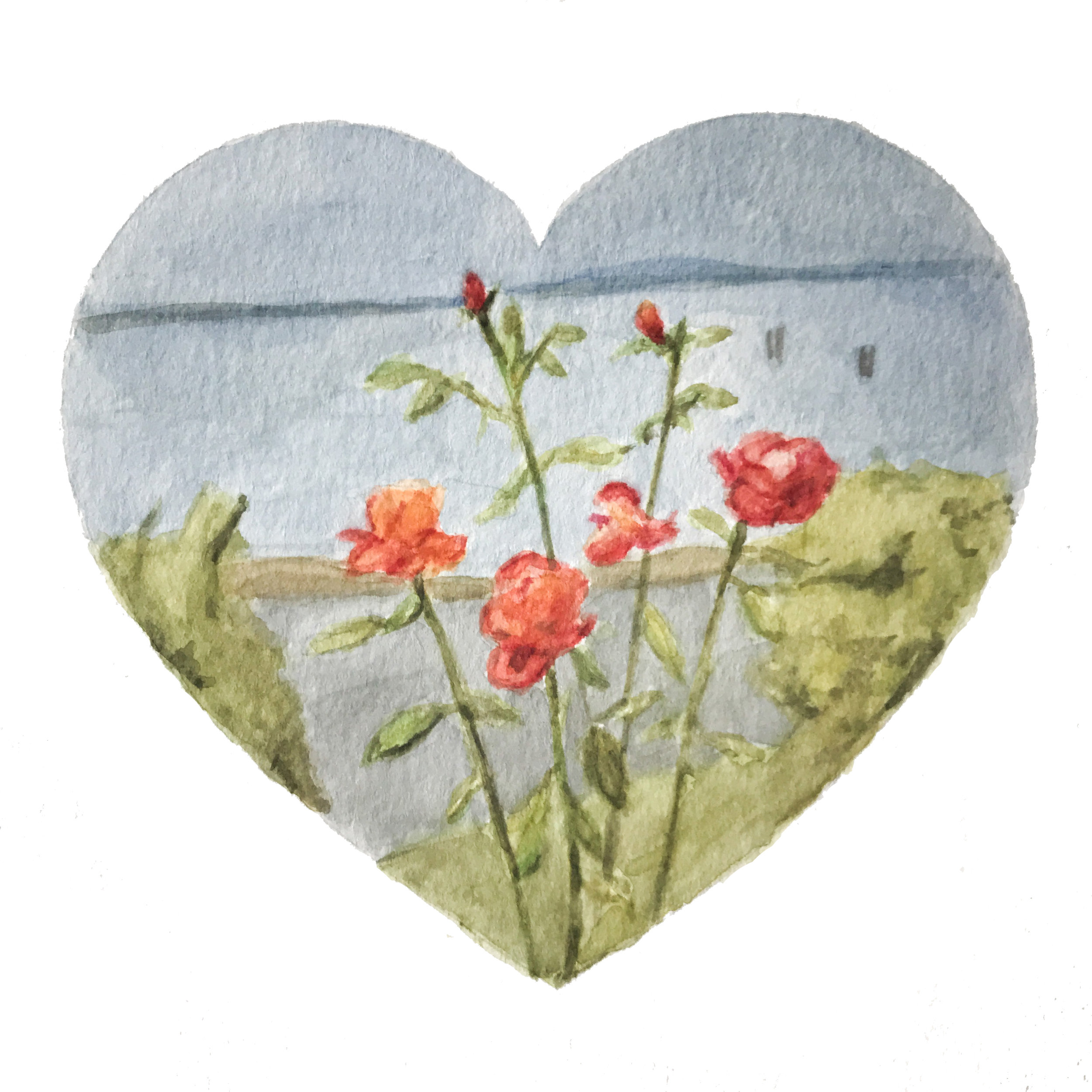 Elliott Bay Roses  Watercolor and pencil on paper, 2018