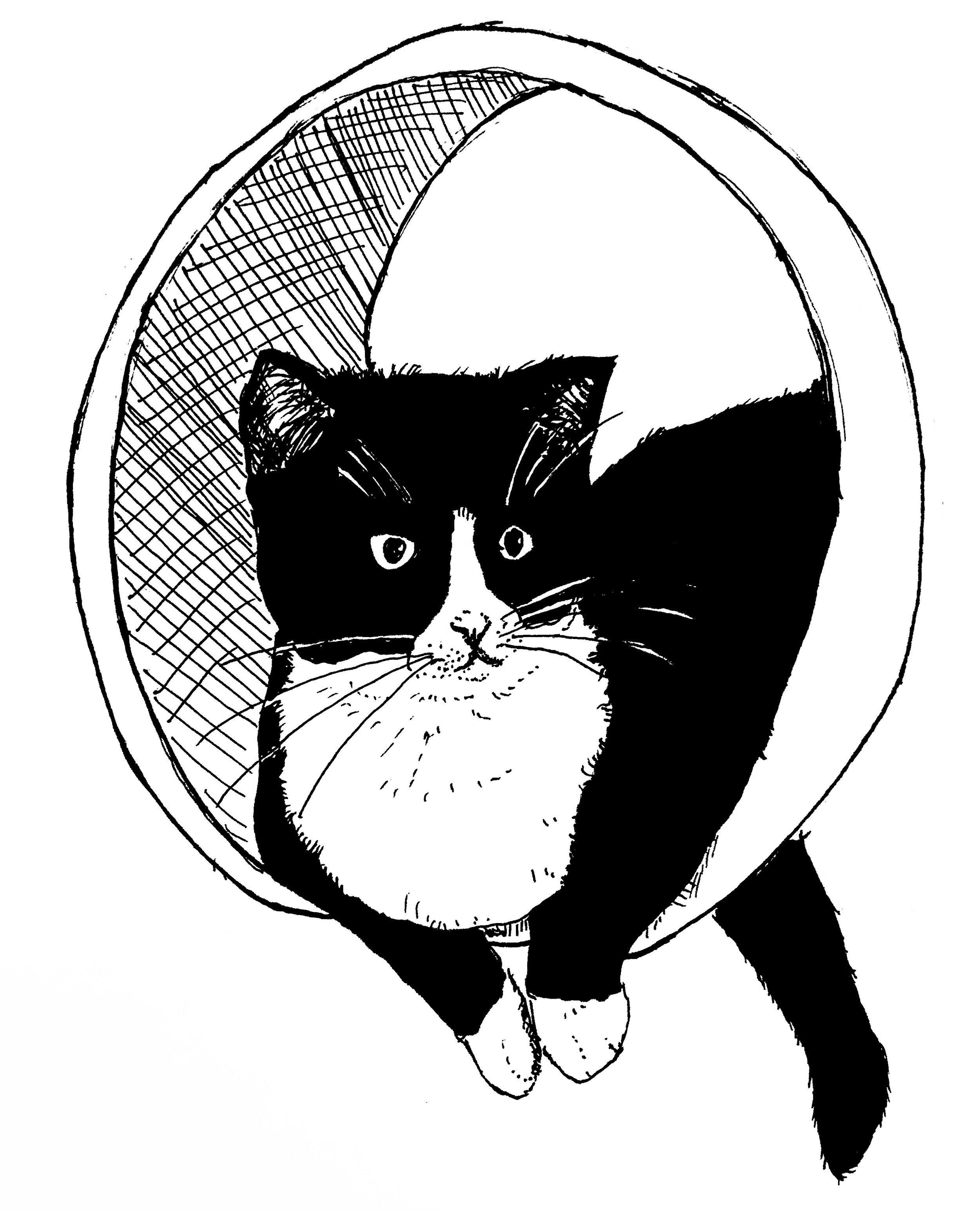 Alfie in the Cat Tree