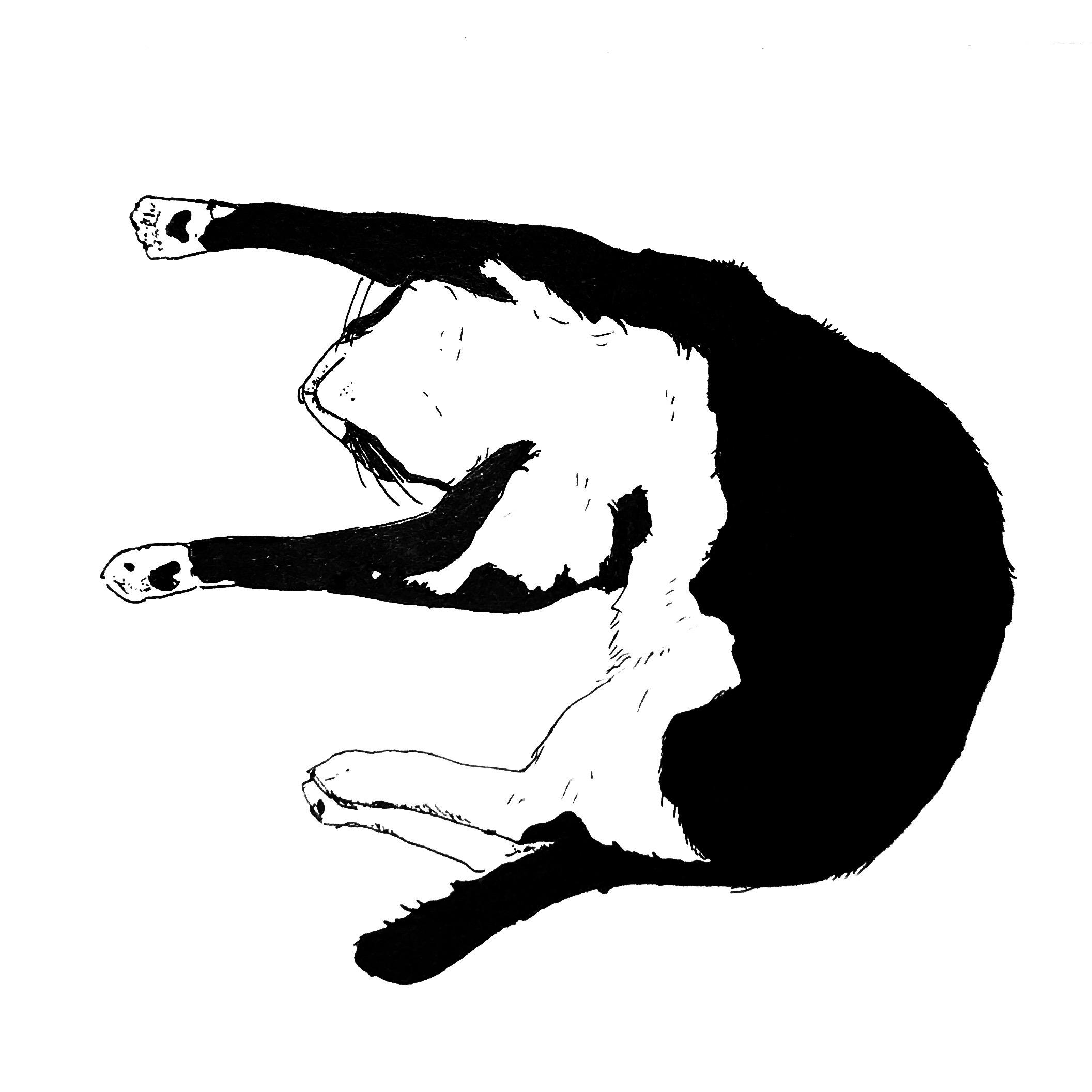 Alfie Stretching