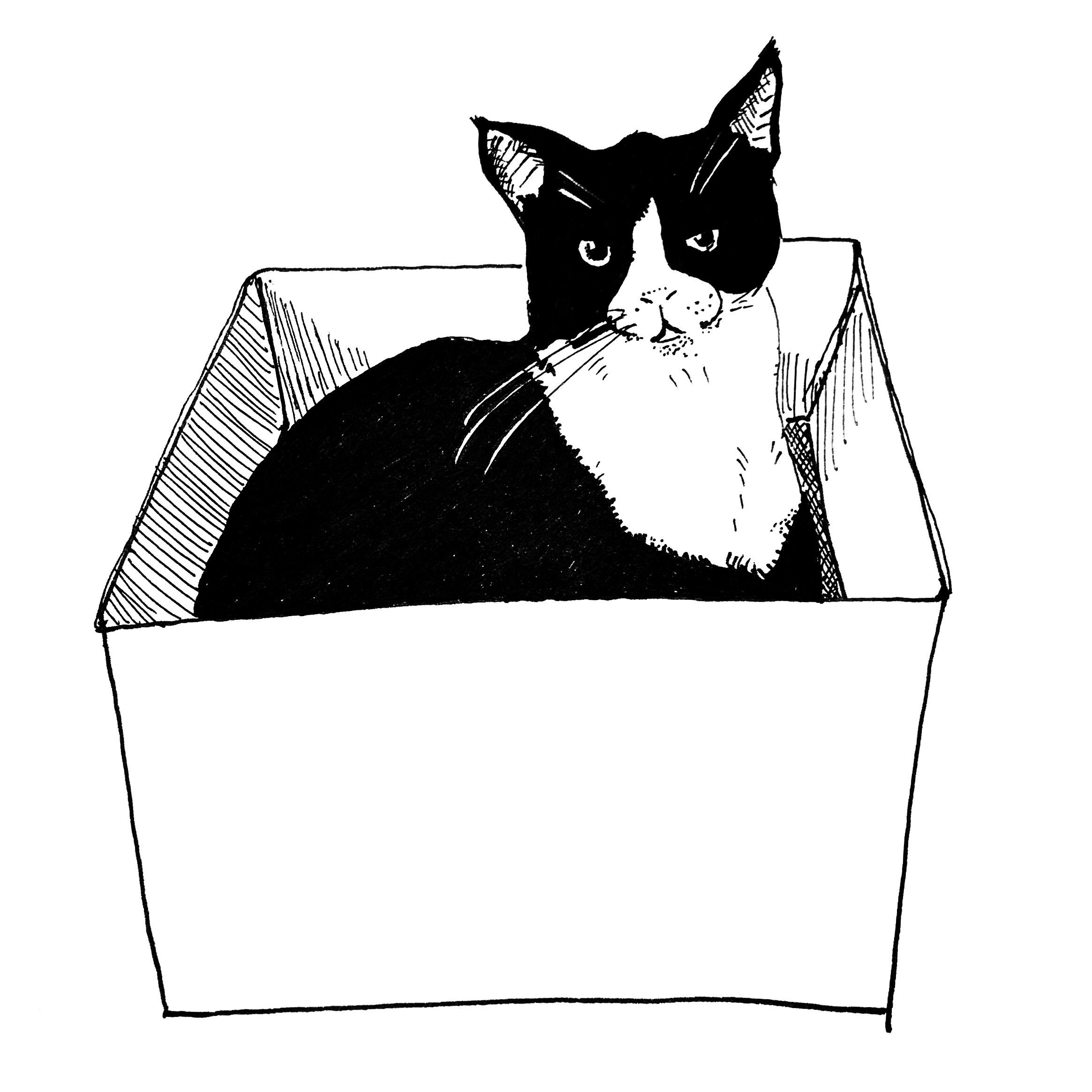 Alfie in the Box