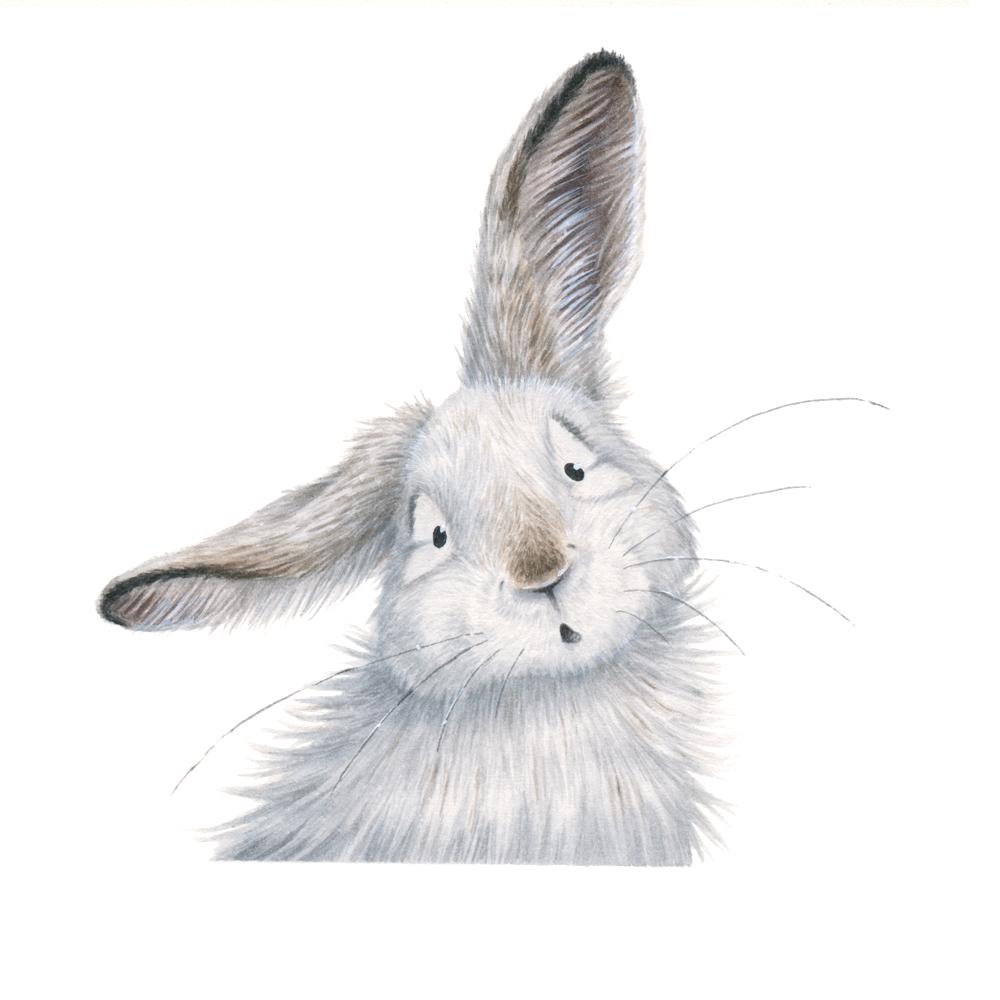 rabbit-face-kristin-makarius.jpg