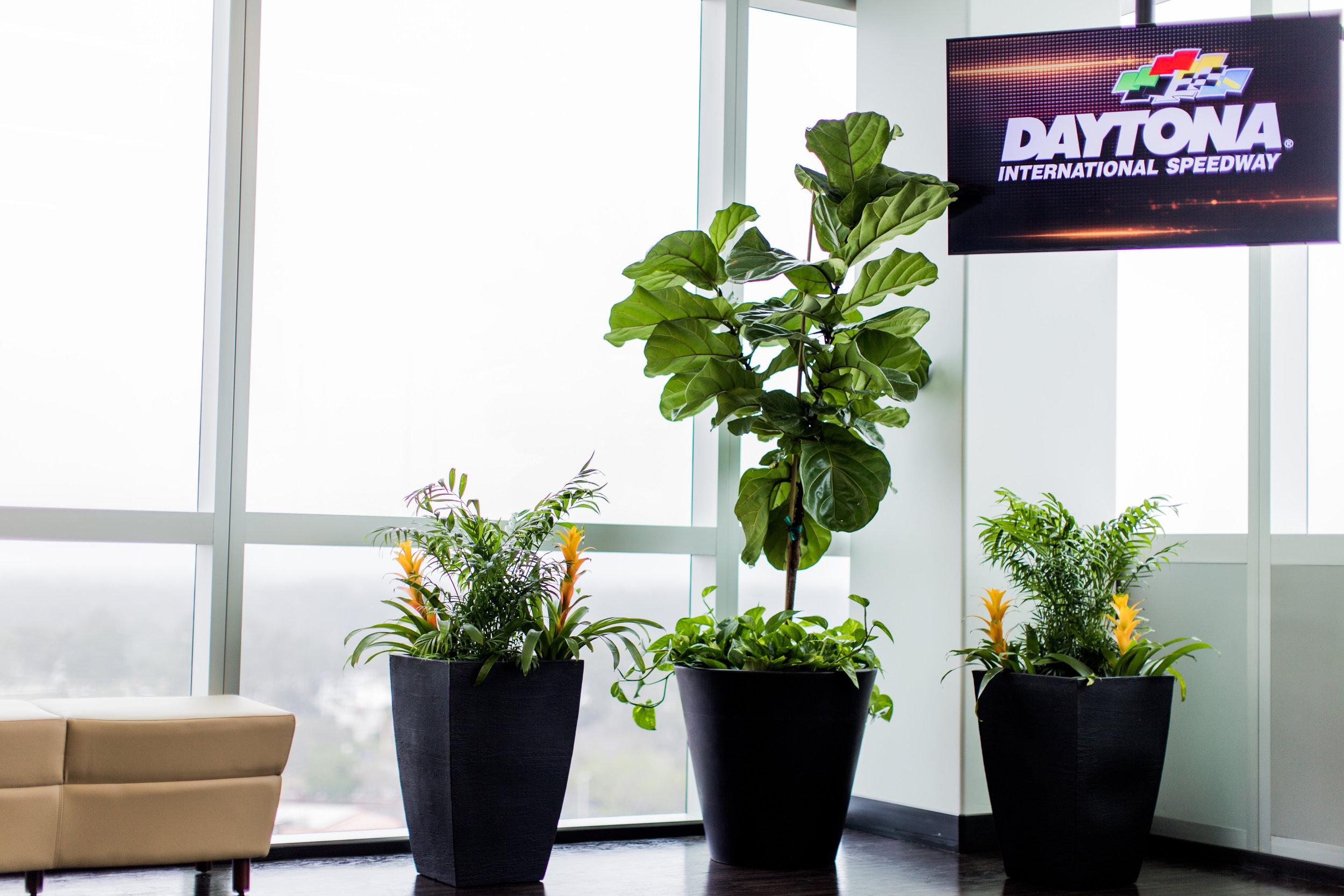 advantage plants - daytona speedway-13.jpg