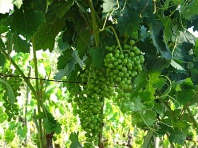 Future wine