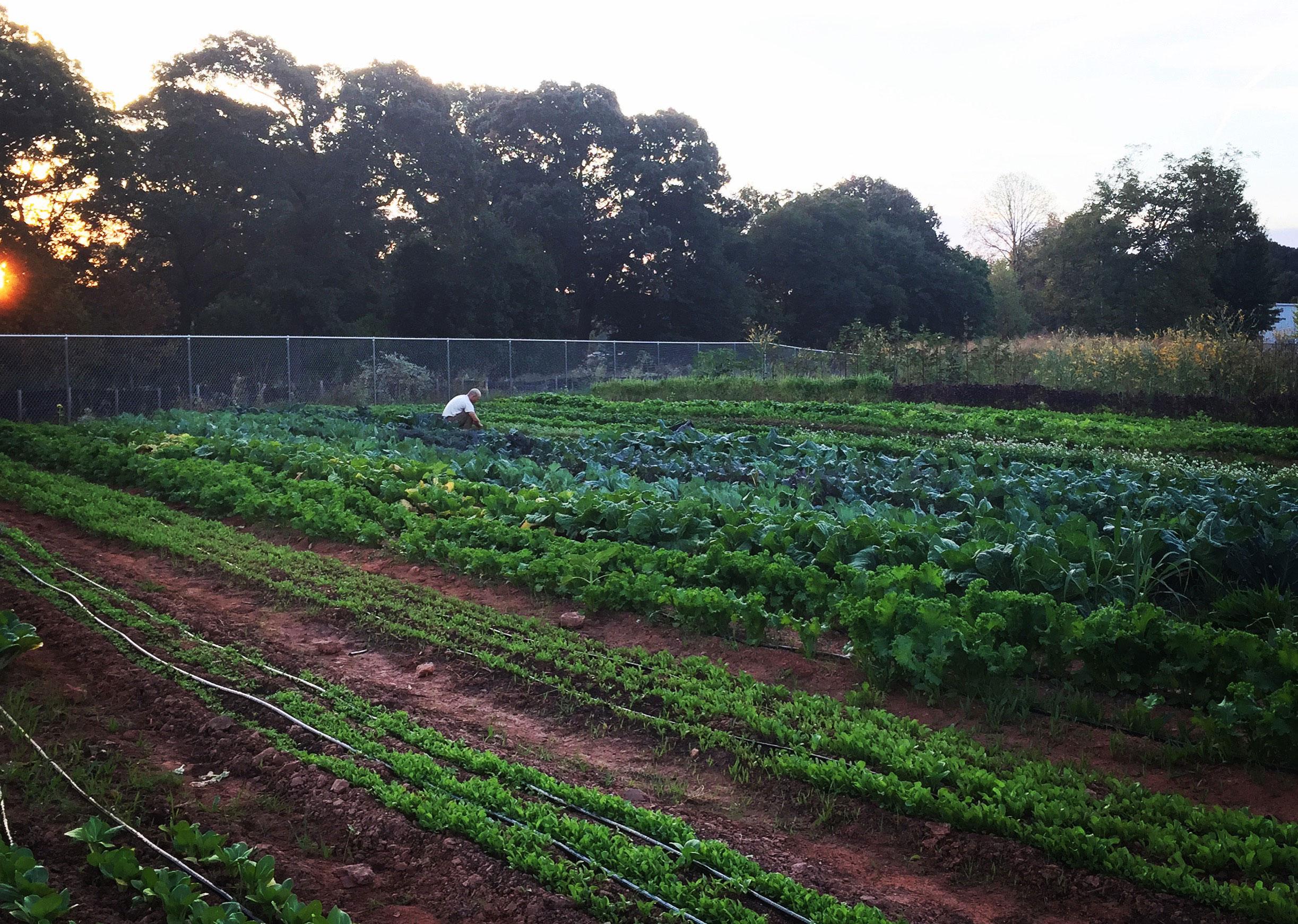 Aluma_Farm_Image.jpg