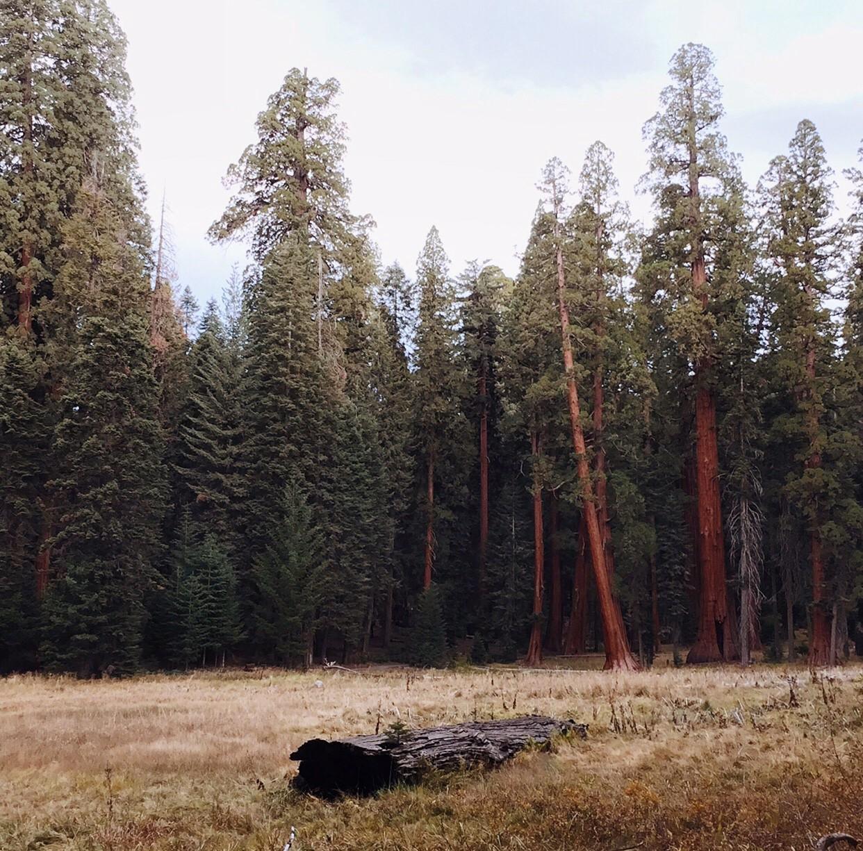 Sequoia National Park- 2016