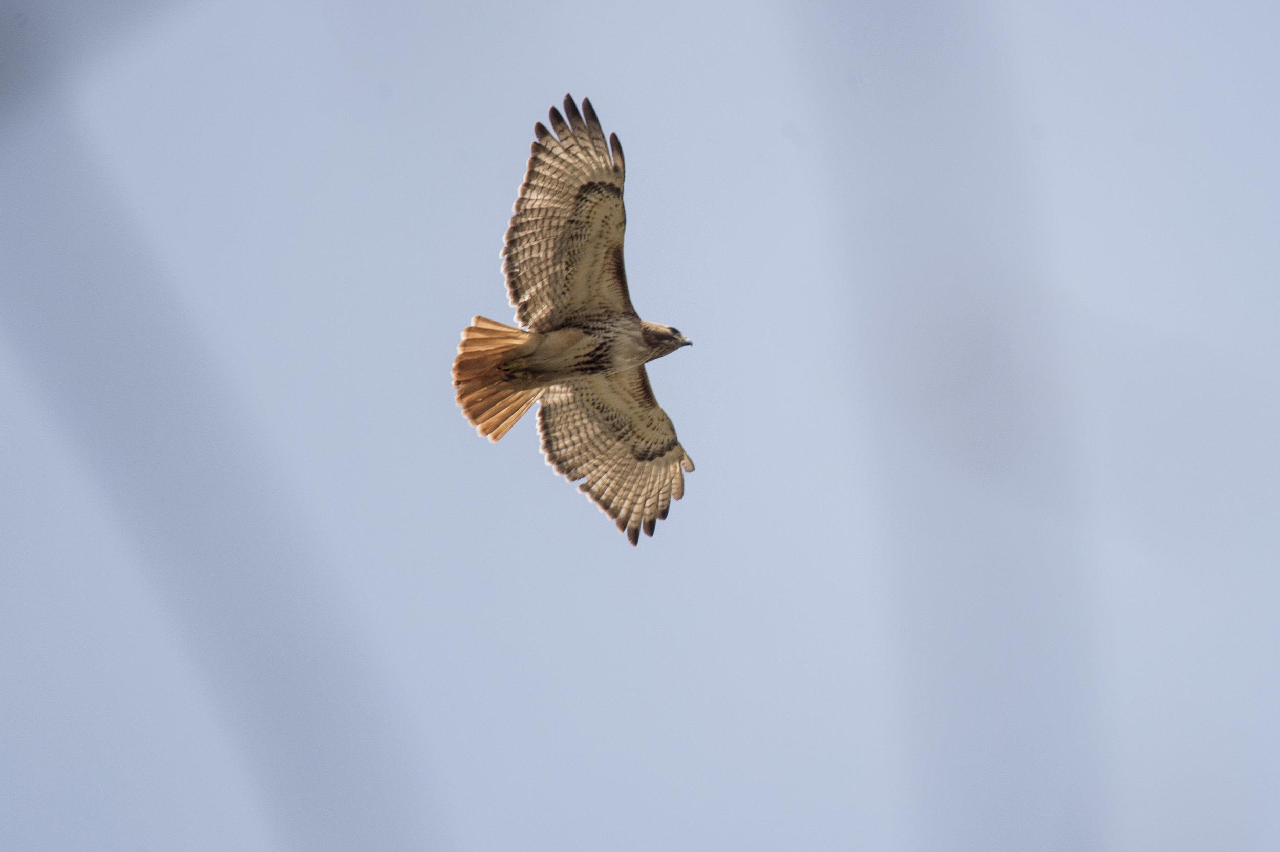 wingspan_k.jpg