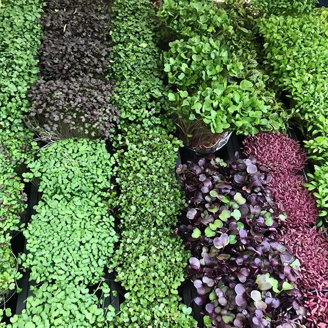 Exploring the land of micro greens. @jojosgreens @melbournefarmersmarkets . . #microgreens #supernutrients #eattherainboweveryday #optimalperformance