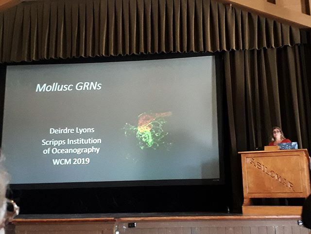 Our fearless leader Dr. Deirdre Lyons (Twitter= @DeirdreLyonsPhD ) presenting her research on Mollusc gene regulatory networks (GRNs) at the 2019 World Congress of Malacology!! 🐚🐌 • Thanks @hereroajohnston for the pictures!! 📷 • #malacology #californiaacademyofsciences #wcm #worldcongressofmalacology #worldcongressofmalacology2019 #shells #shells🐚 #embryos #phd #phdlife #postdoc #postdoclife #science #instascience #asilomar #snail #urchin #starfish #seaslug #seastar #nudibranch