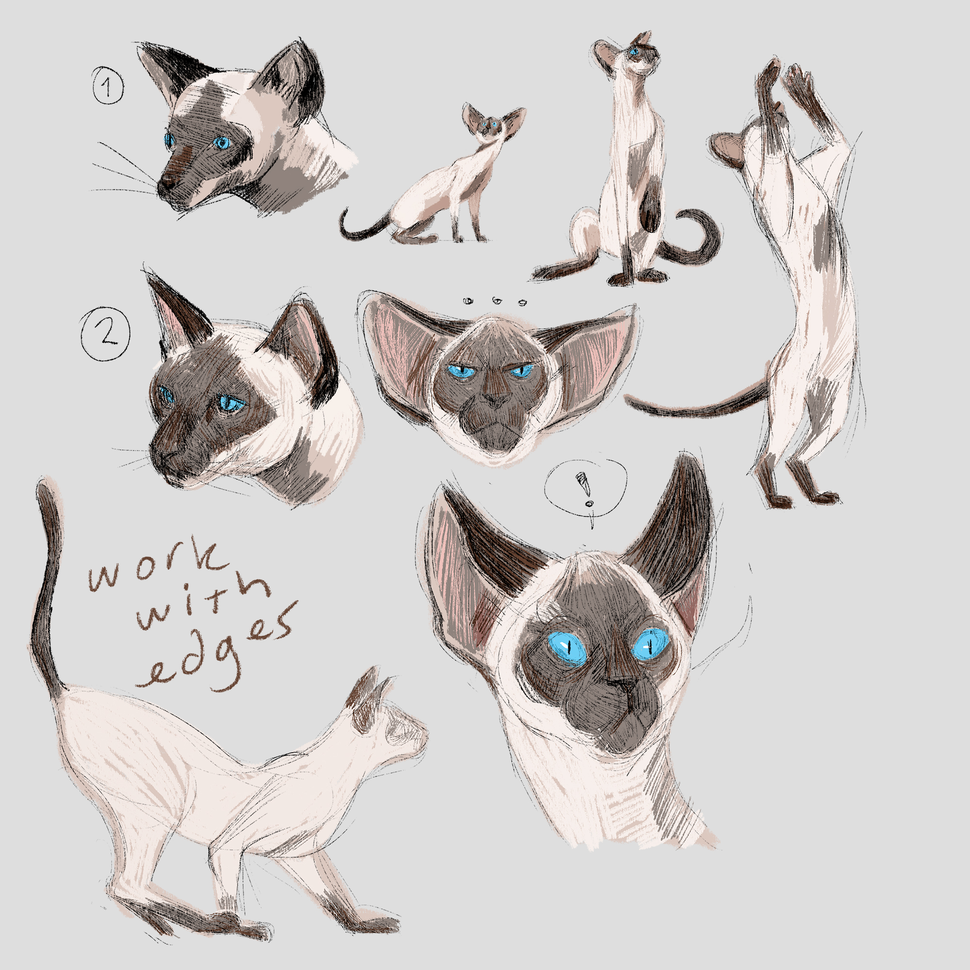 study/exploration of a sealpoint siamese cat character