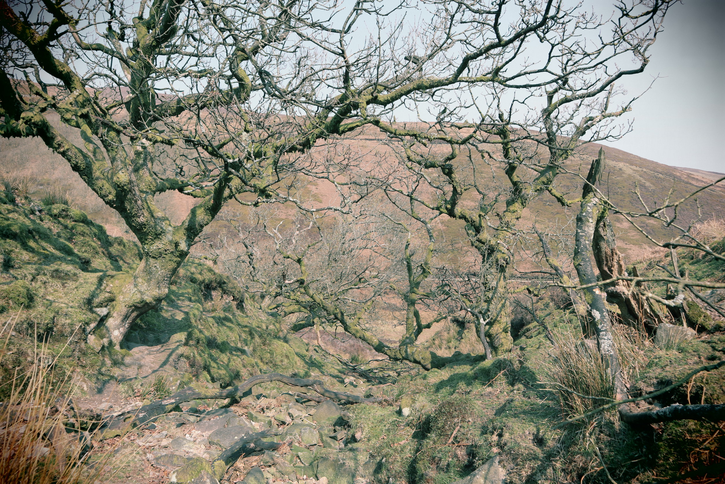 A view of the 'Forest' of Bowland