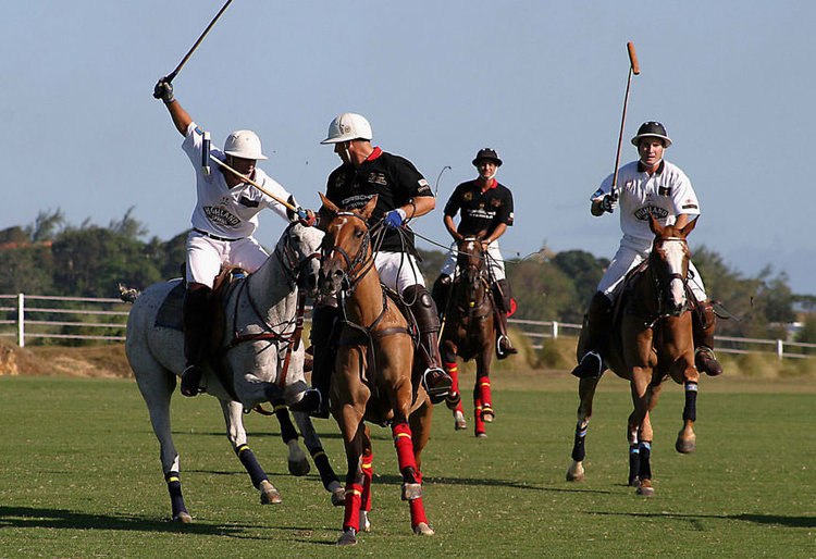 863x591_cobblers-cove-polo+option.jpg