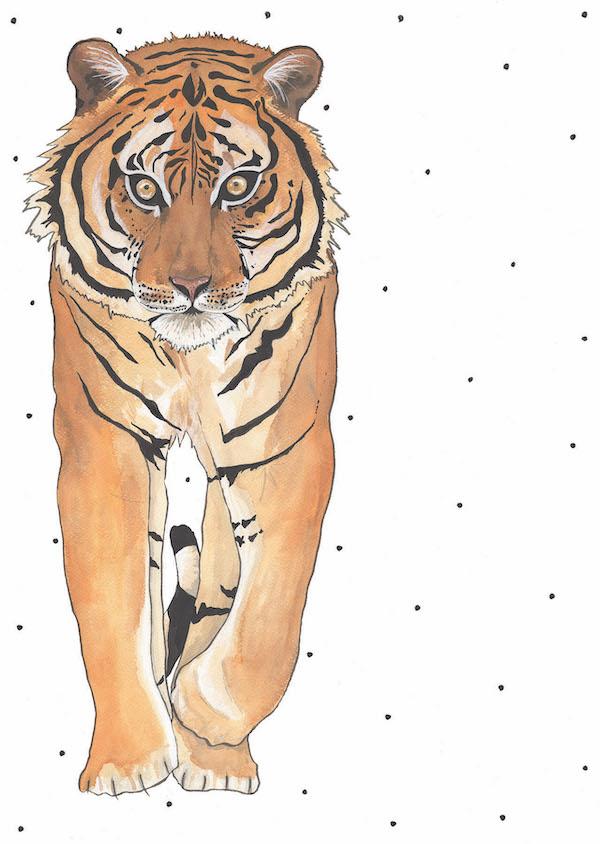 'Spotty Tiger'