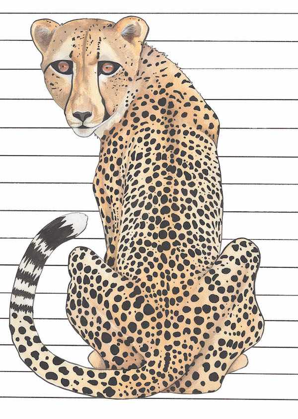 'Stripey Cheetah'