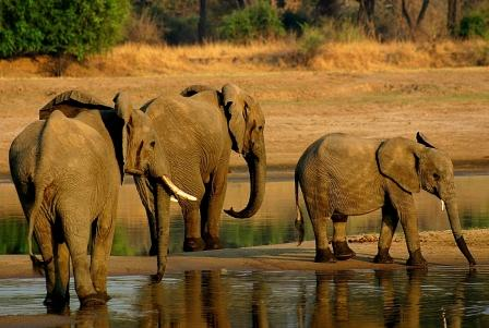 025-Elephants-South-Luangwa.jpg