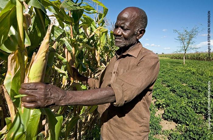 007_agcf0025-african-conservation-farmer--crops-zambia_20140216_1466987633.jpg