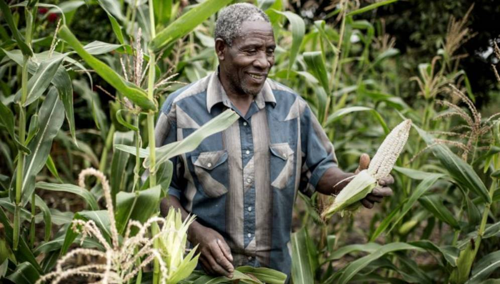 maize-zambia-farmer.jpg