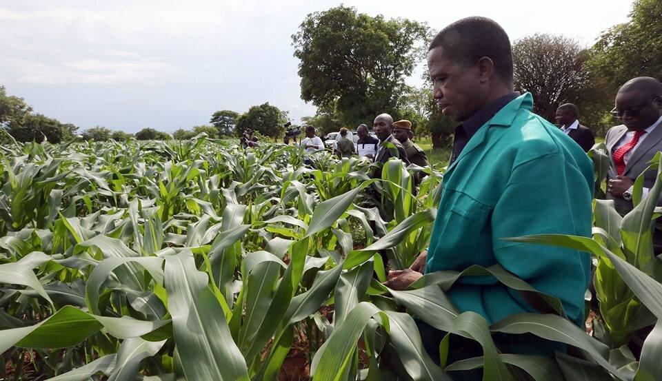 President-Lungu-Lundazi-Maize-Field.jpg