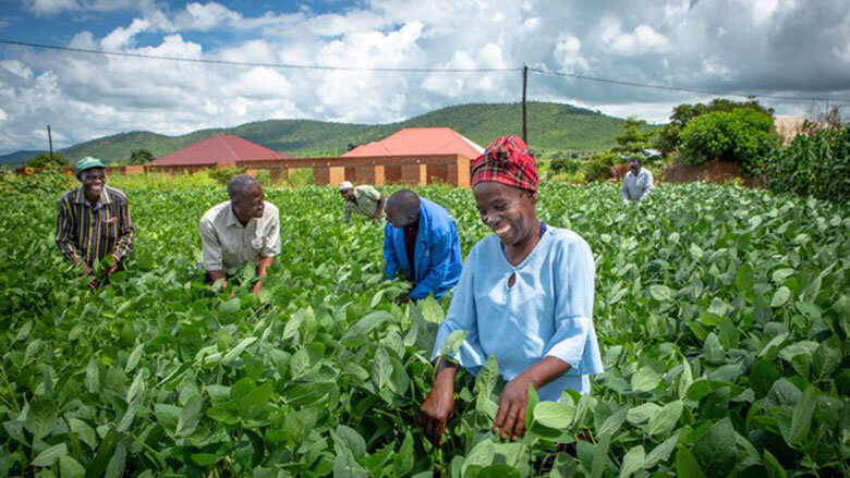 zambia-agriculture-investment-plan-supports-climate-smart-agricultural-development-780x439.jpg