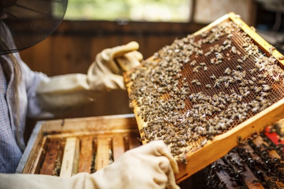 bee-hive-plans-990x660.jpg