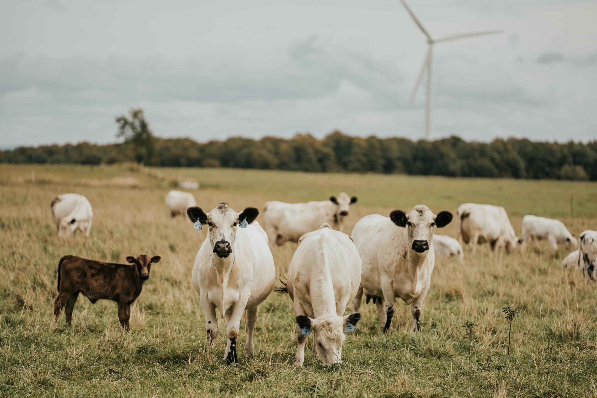 Windmills-03463.jpg