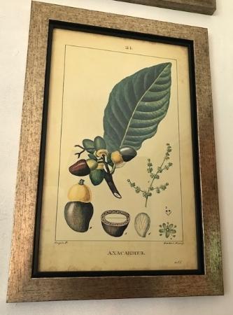 Cuadro lámina botánica