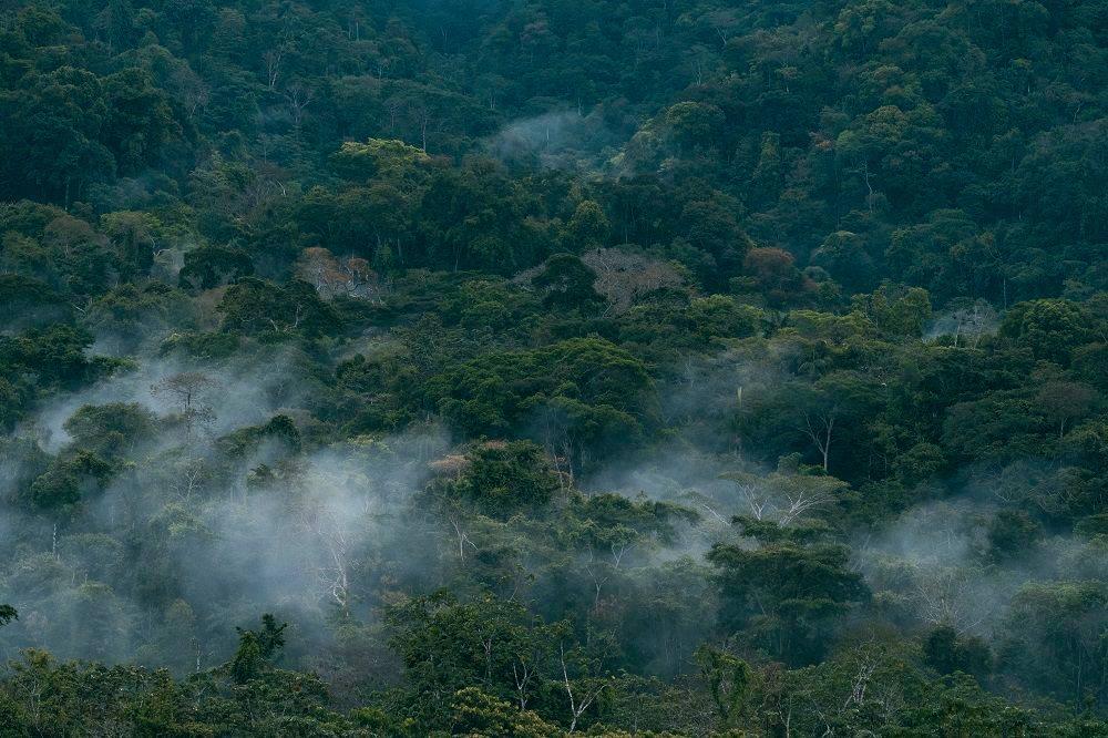 1. Mist in Madre de Dios