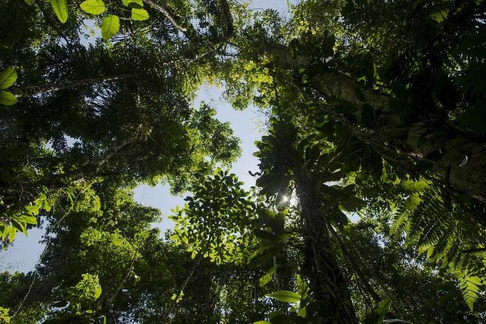 7. Sun through the canopy