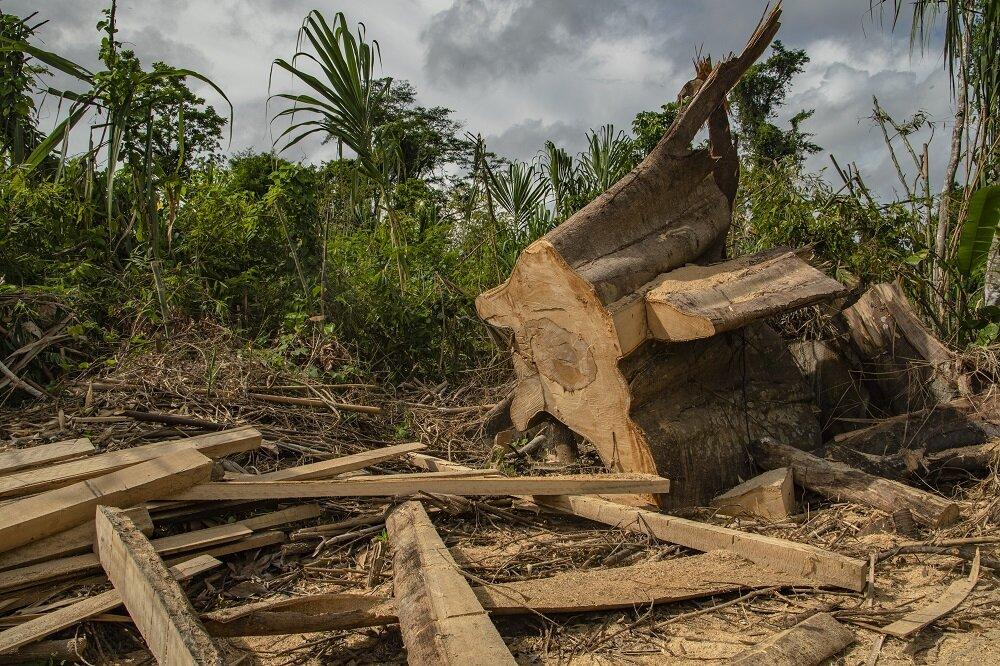 logging-manu-national-park-amazon-rainforest-peru-voices-on-the-road-bethan-john-DSC_1971.jpg