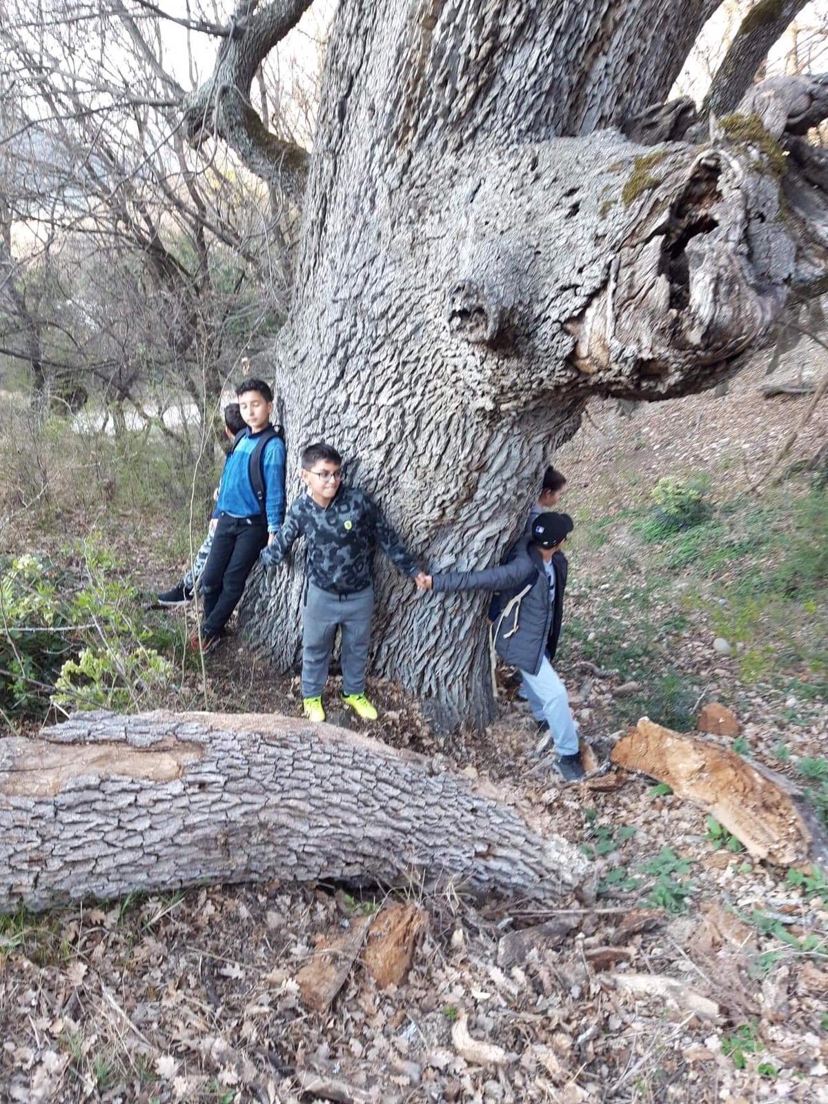 Autour d'un arbre centenaire -