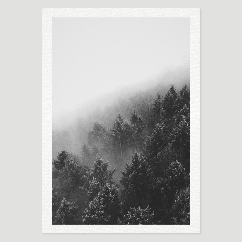 prints_forest2.jpg
