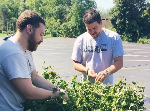 Part of our brewery's dedication to the community is to remain as sustainable as possible. We even grow our own small batch of hops behind our brewpub!