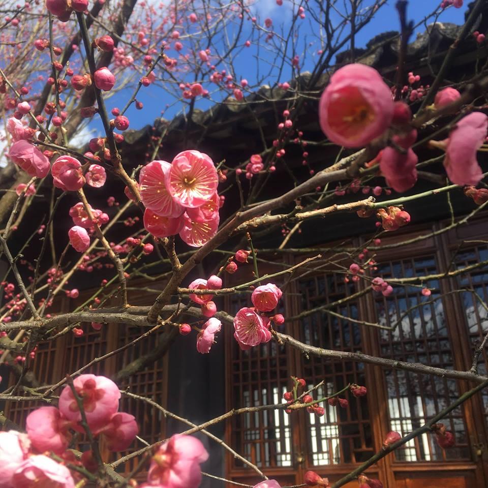 Flowering Tree Shub Walk.jpg