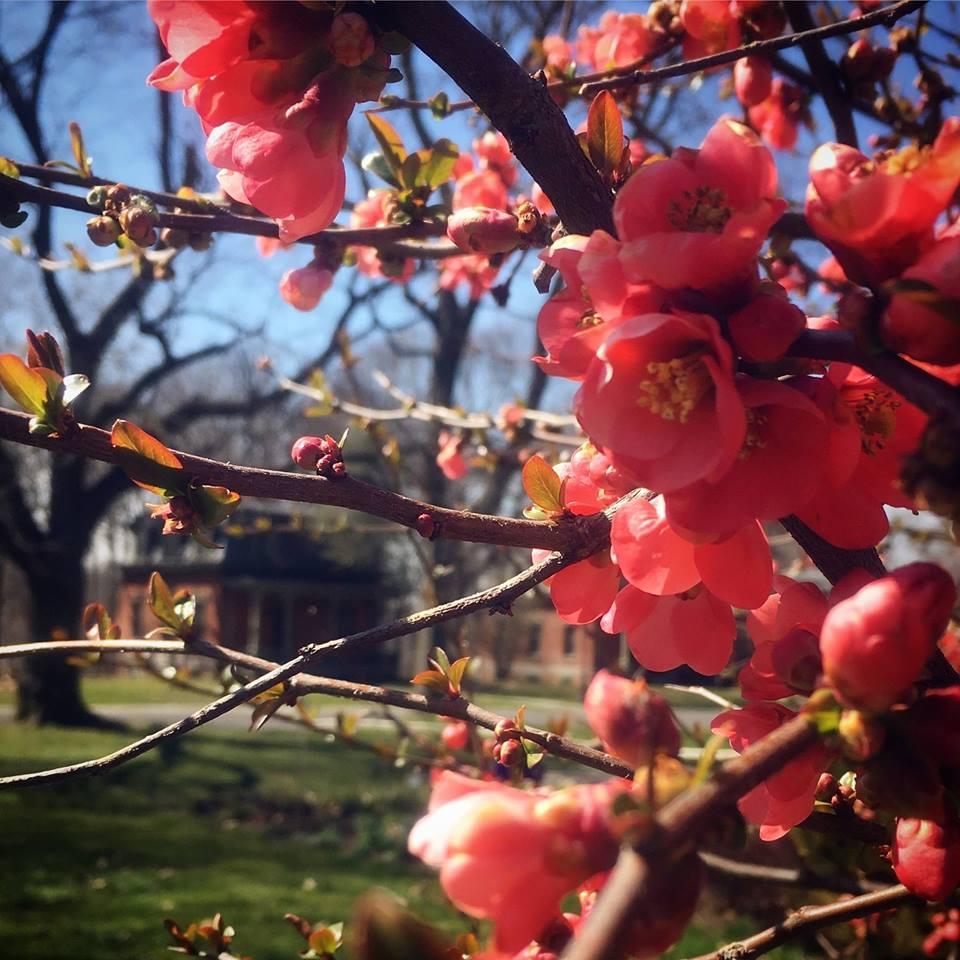 Spring Flowers Walk.jpg