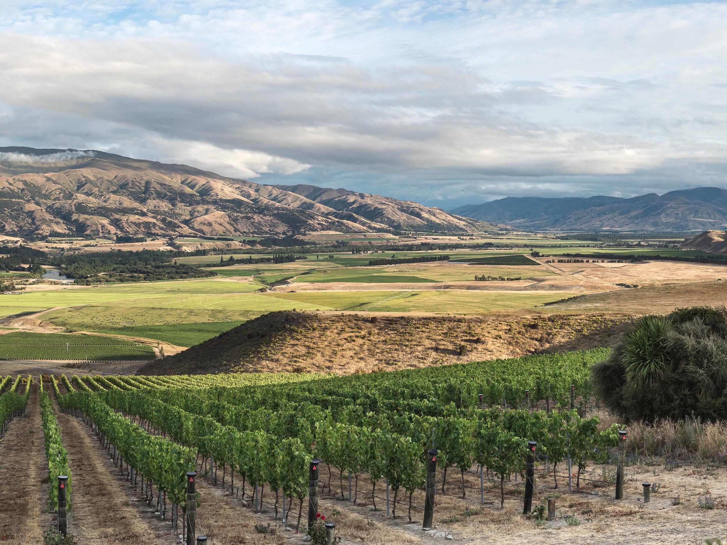 The elevated northern view from the Chinaman's Terrace vineyard, down toward Zebra's (triangular) Bendigo Flat Vineyard in the distance.