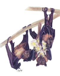 Wright Lindsay - Flying Foxes 600 pixels.jpg