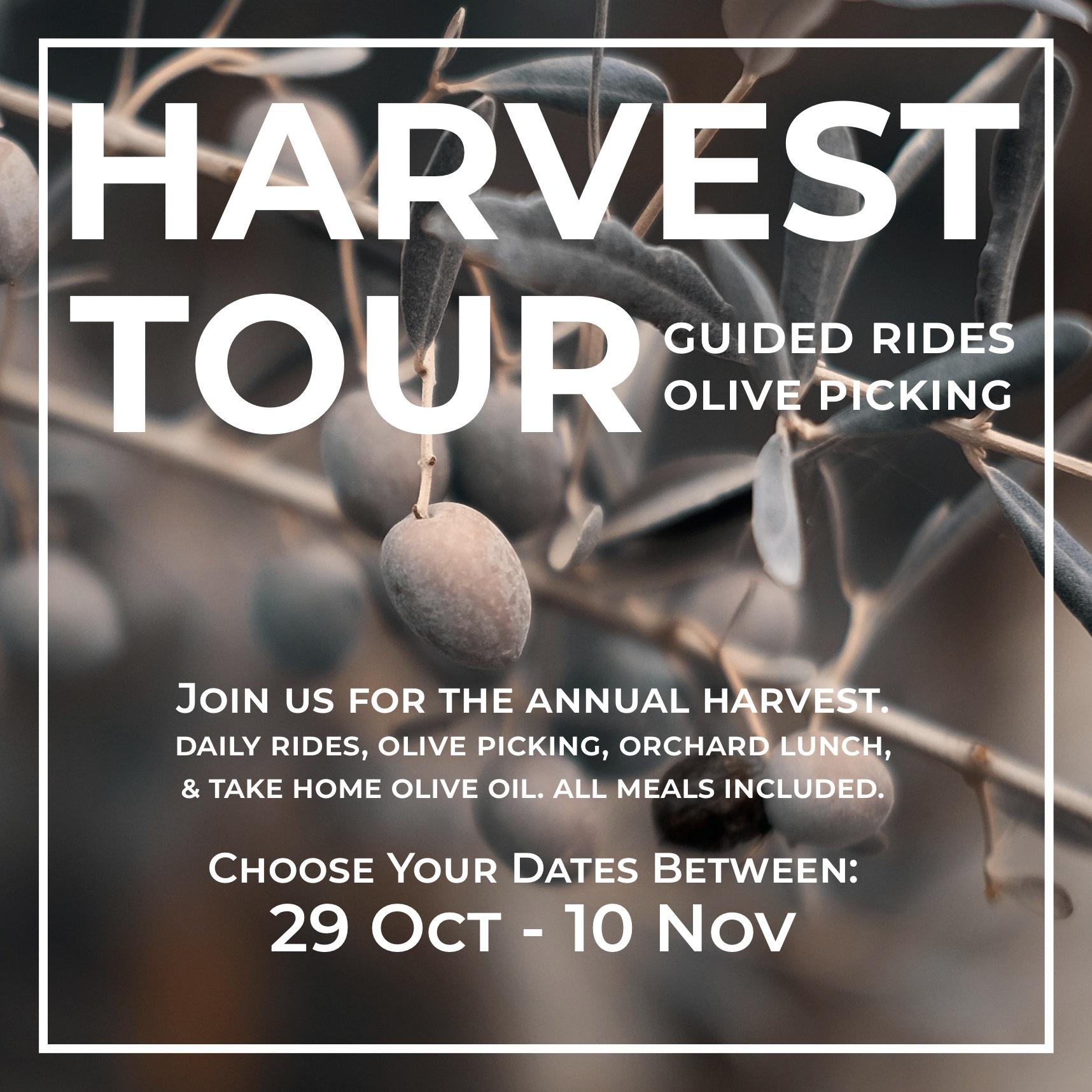 RC Olive Harvest Tour (Blog(.jpg