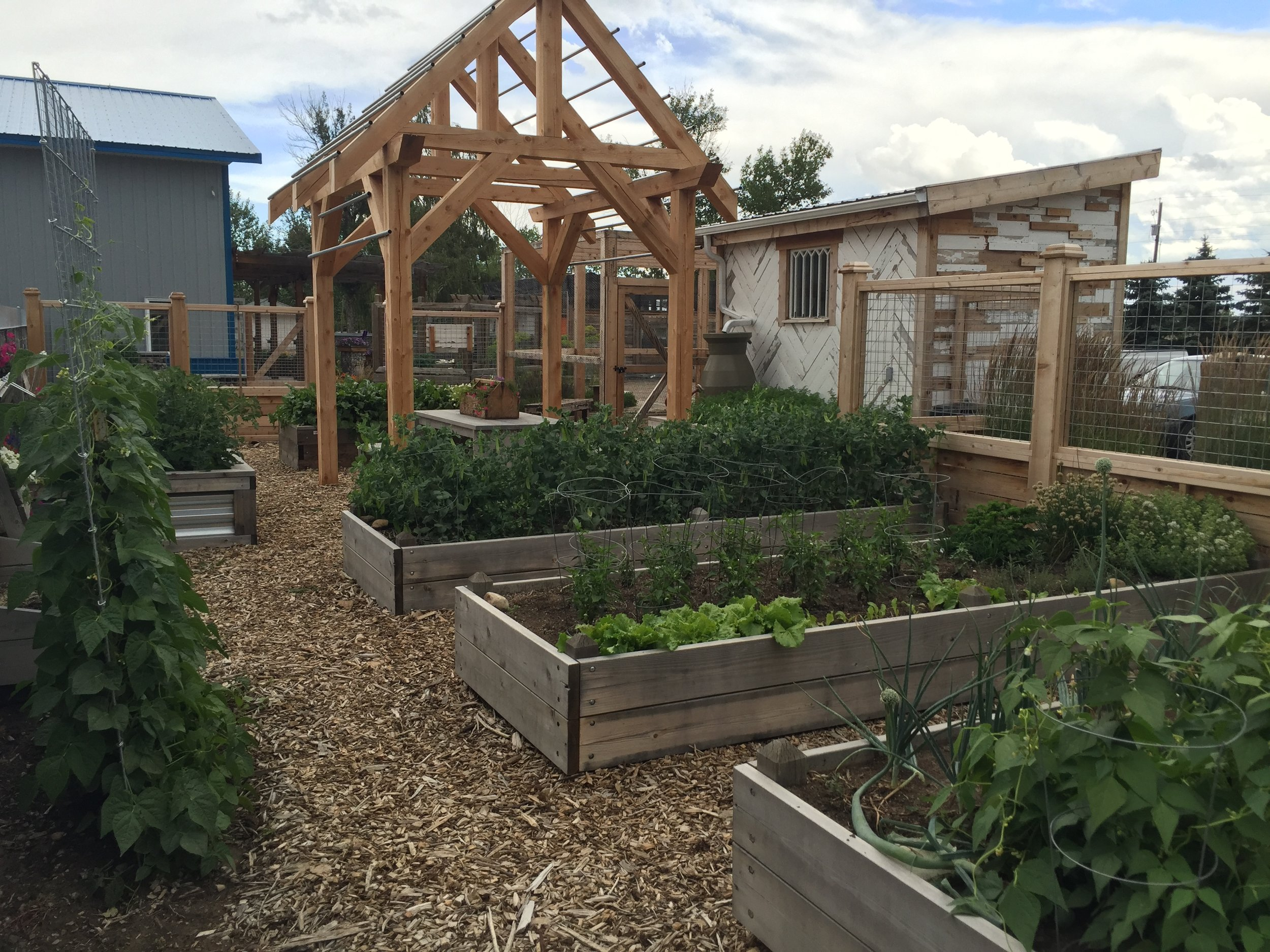 raised-bed-vegetable-garden-lethbridge.jpg